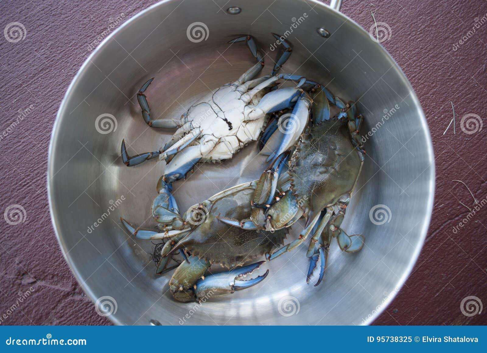 Caranguejos azuis