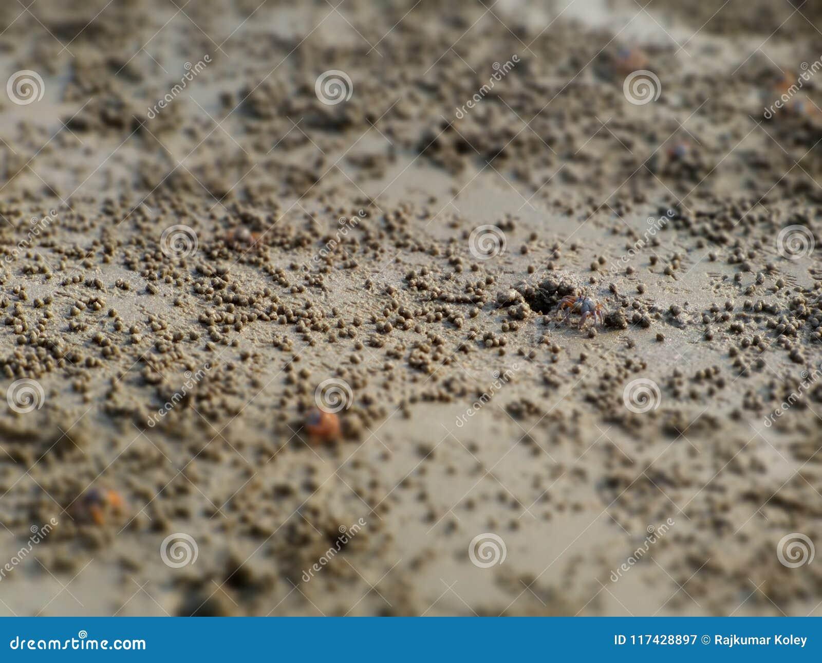 Caranguejos que saem da areia molhada