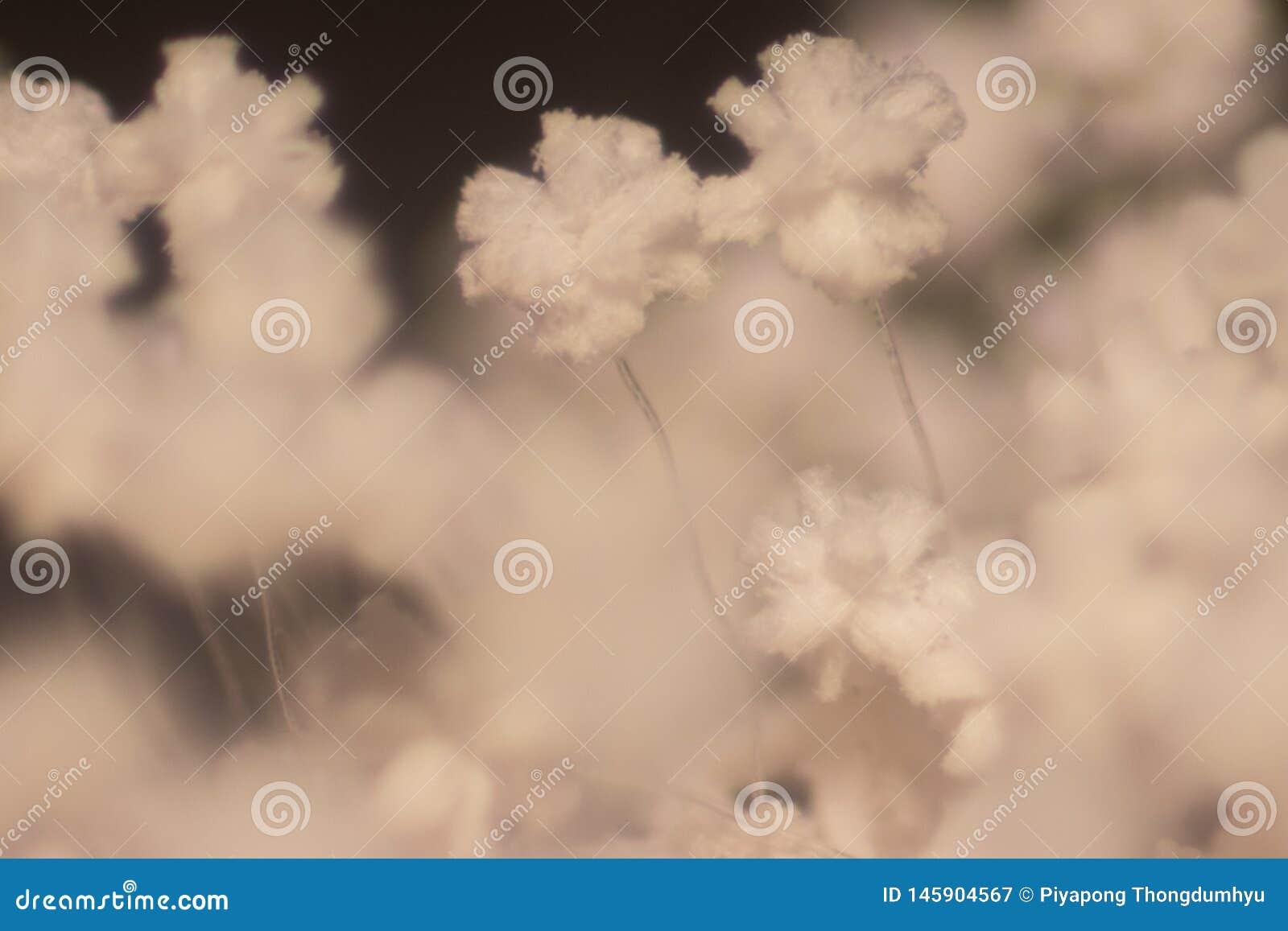 Caratteristiche della colonia della muffa sotto il microscopio