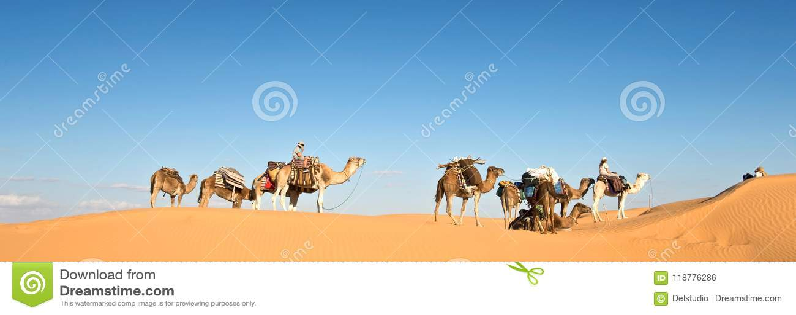 Caravan of camels in the Sand dunes desert of Sahara, South Tunisia