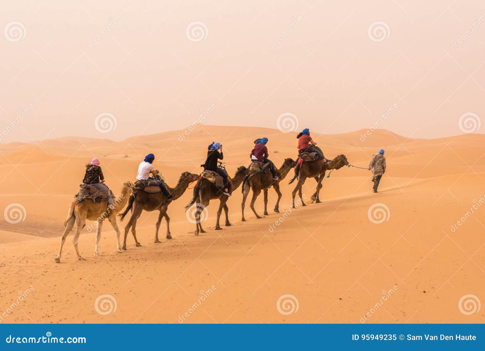 A Caravan Of Camels Walking Through The Moroccan Sahara Desert ...