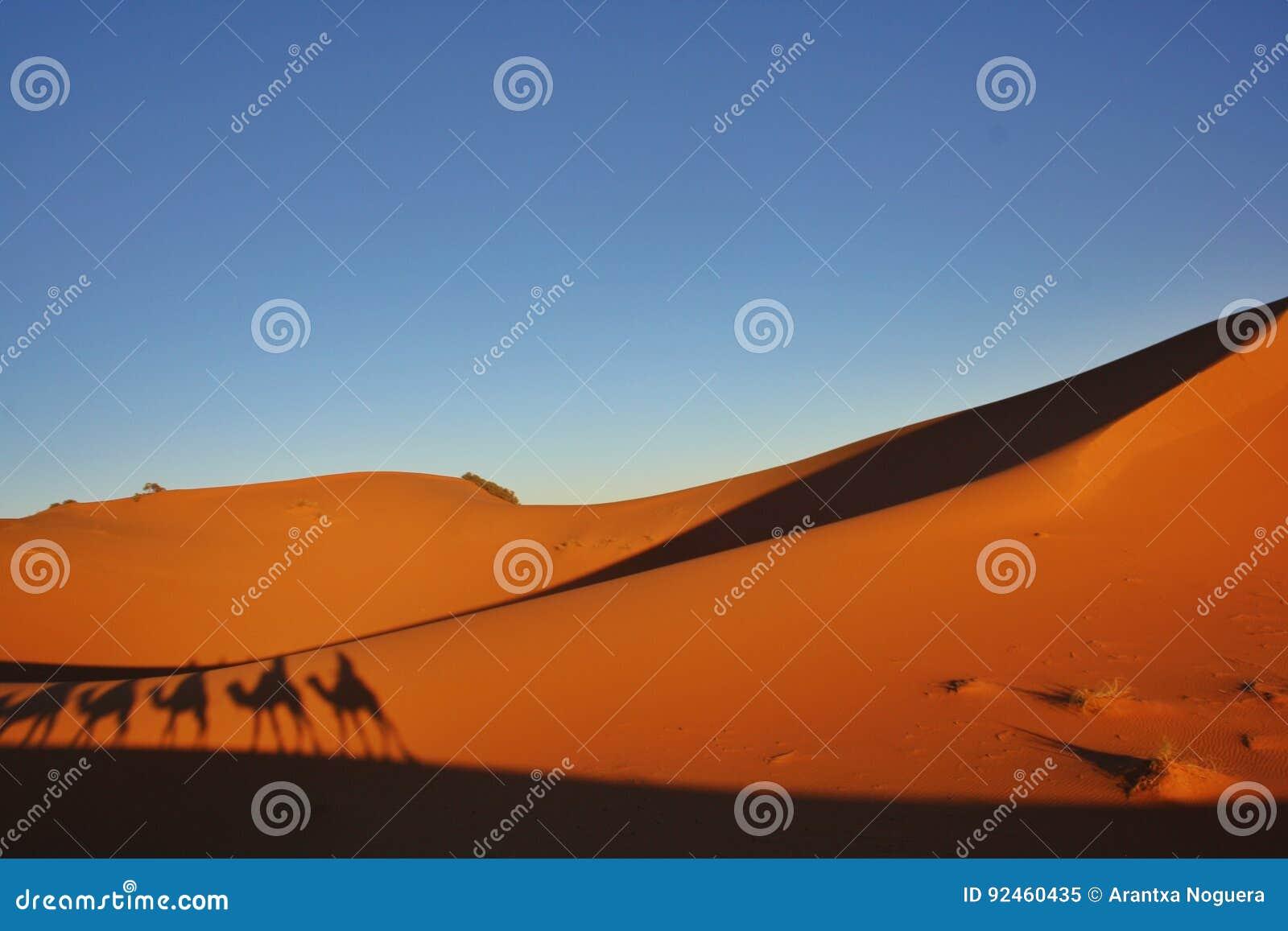 Caravan del cammello del deserto