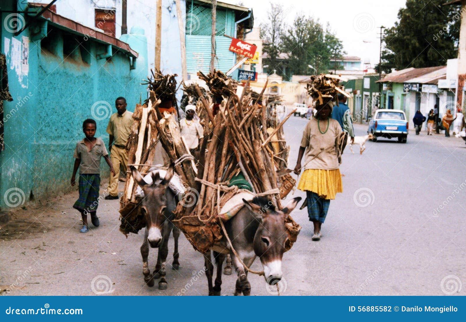Caravan di Harar Jugol