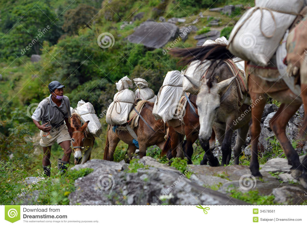 Caravan Of Donkeys Carrying Supplies In The Himalayas ...