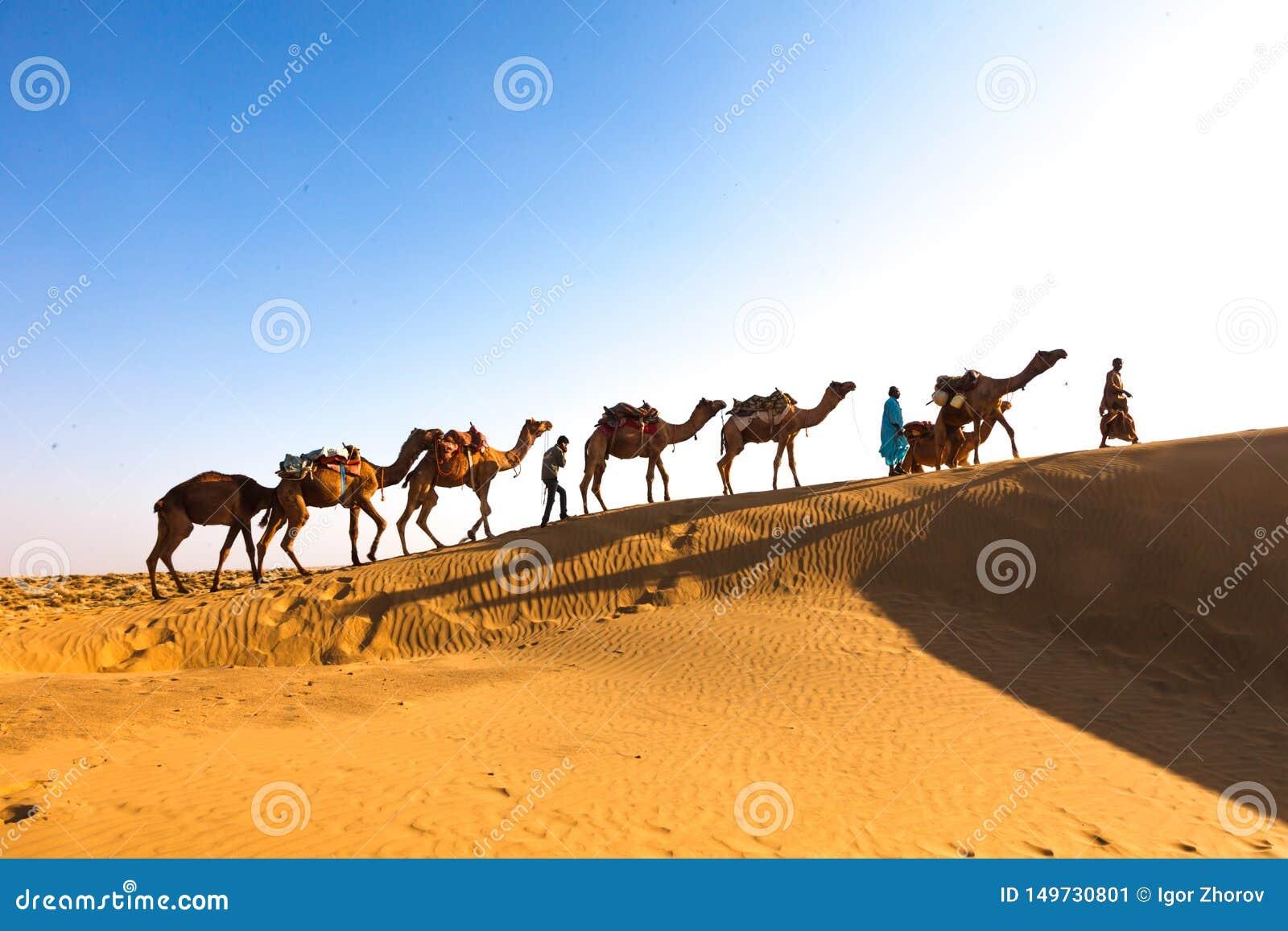Caravan Jaisalmer del deserto