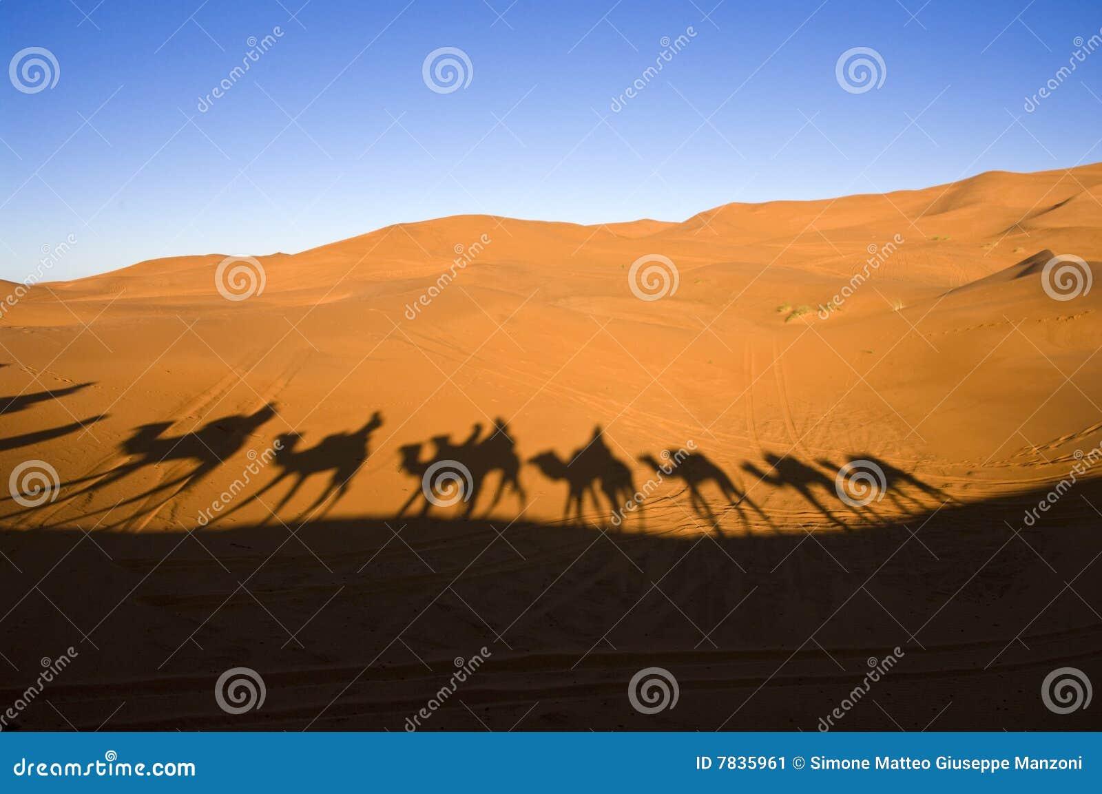 Caravan in the Sahara desert