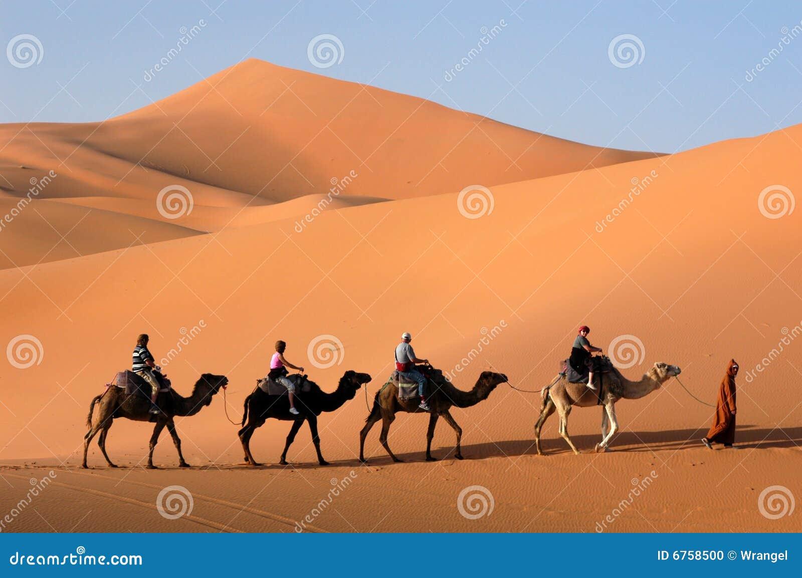Caravana del camello en el desierto de Sáhara