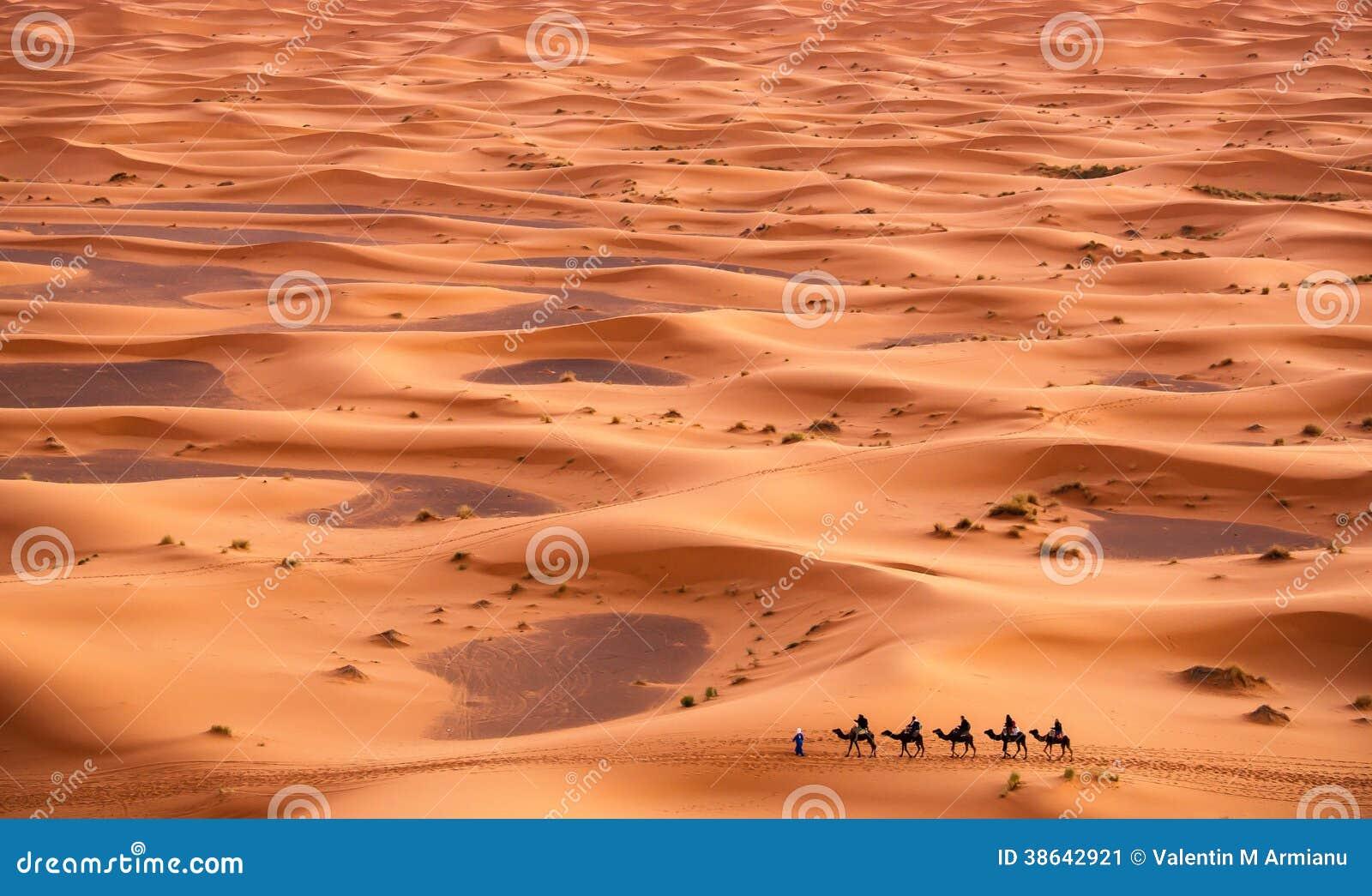 Photos gratuites d'adolescent de chameau d'orteil