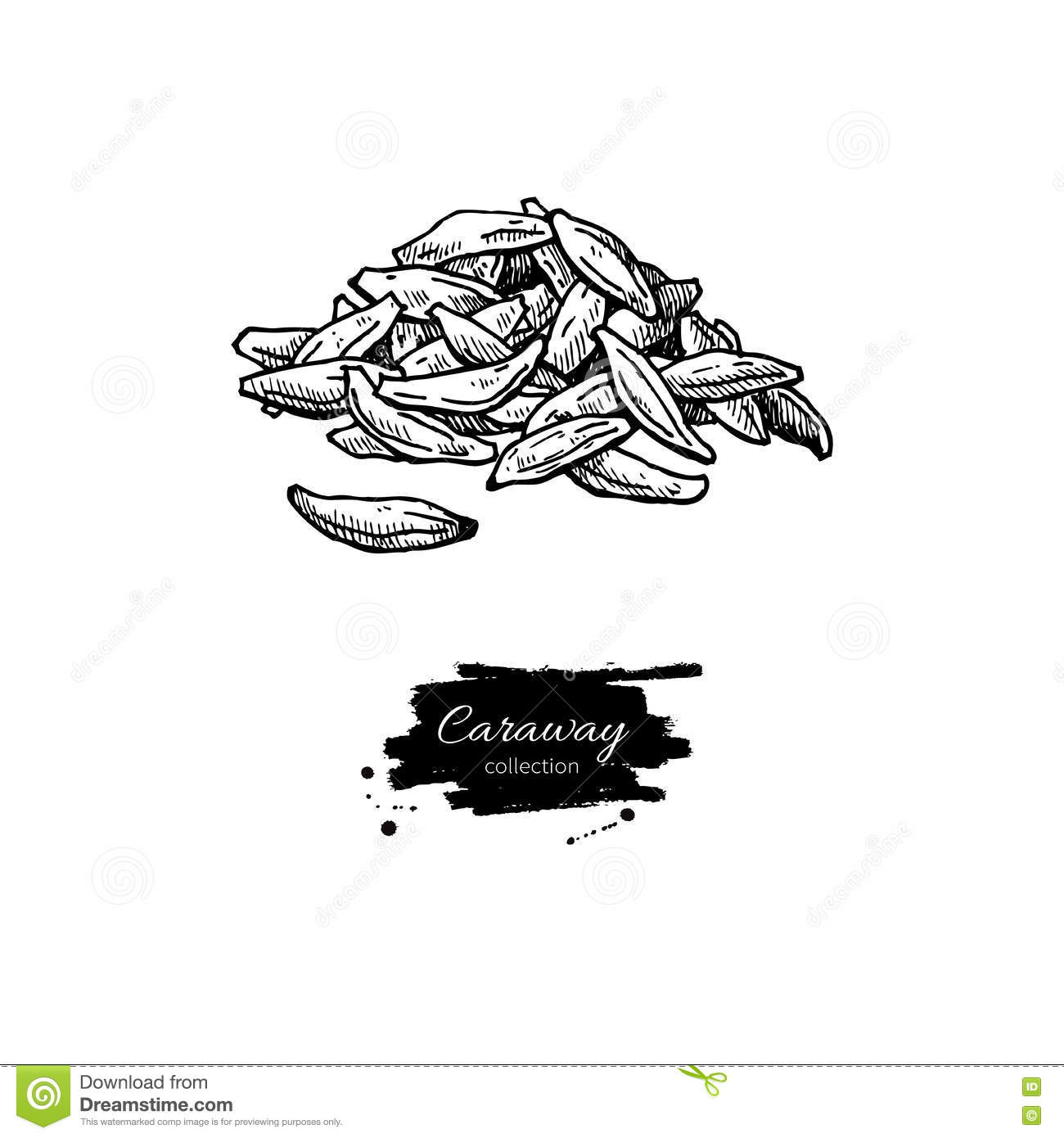 Caraway seed heap vector hand drawn illustration. Isolated spice