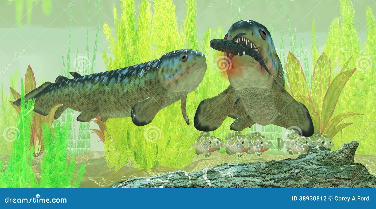 Carboniferous rhizodus fish stock illustration image for Predatory freshwater fish