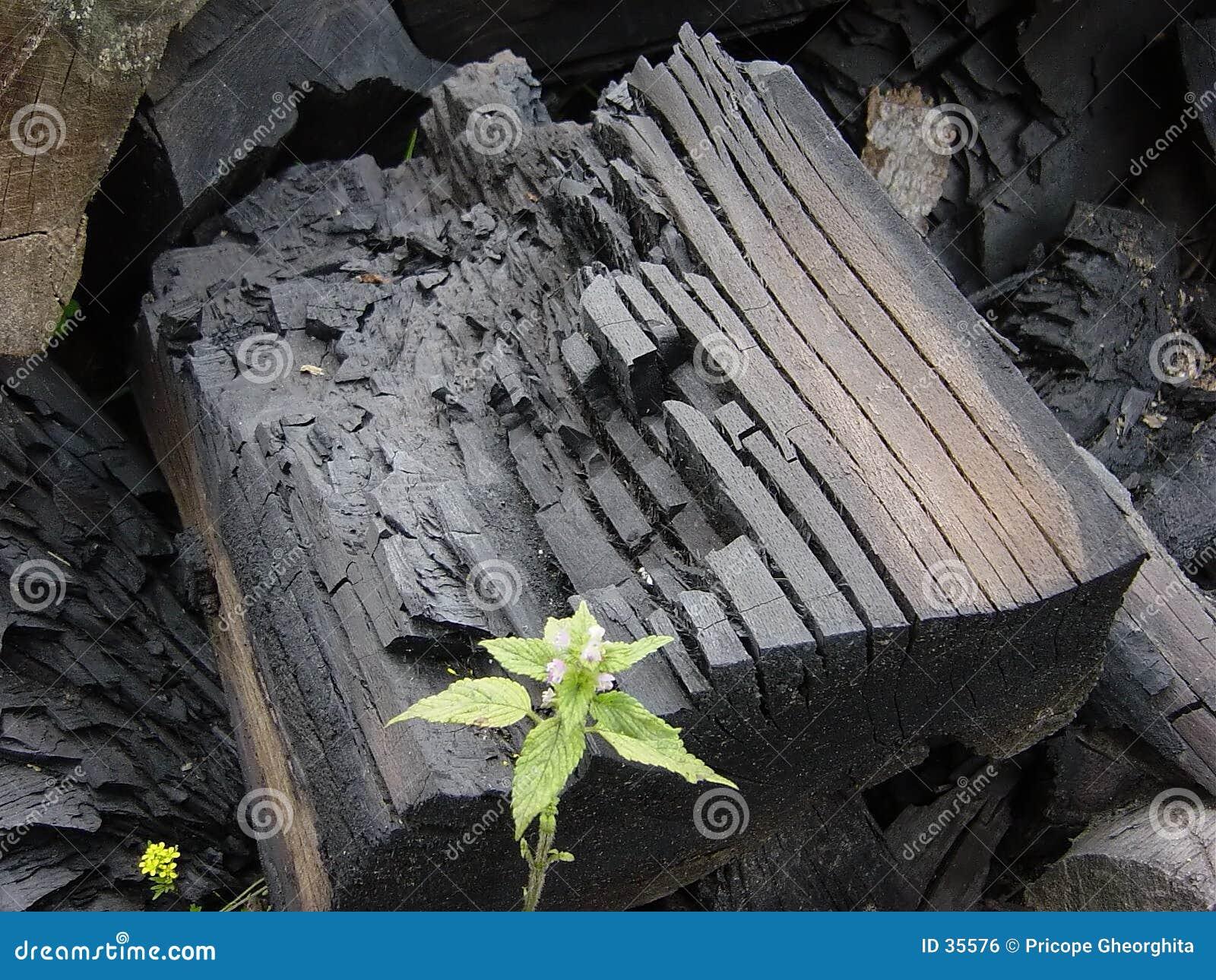Carbonização de carvão