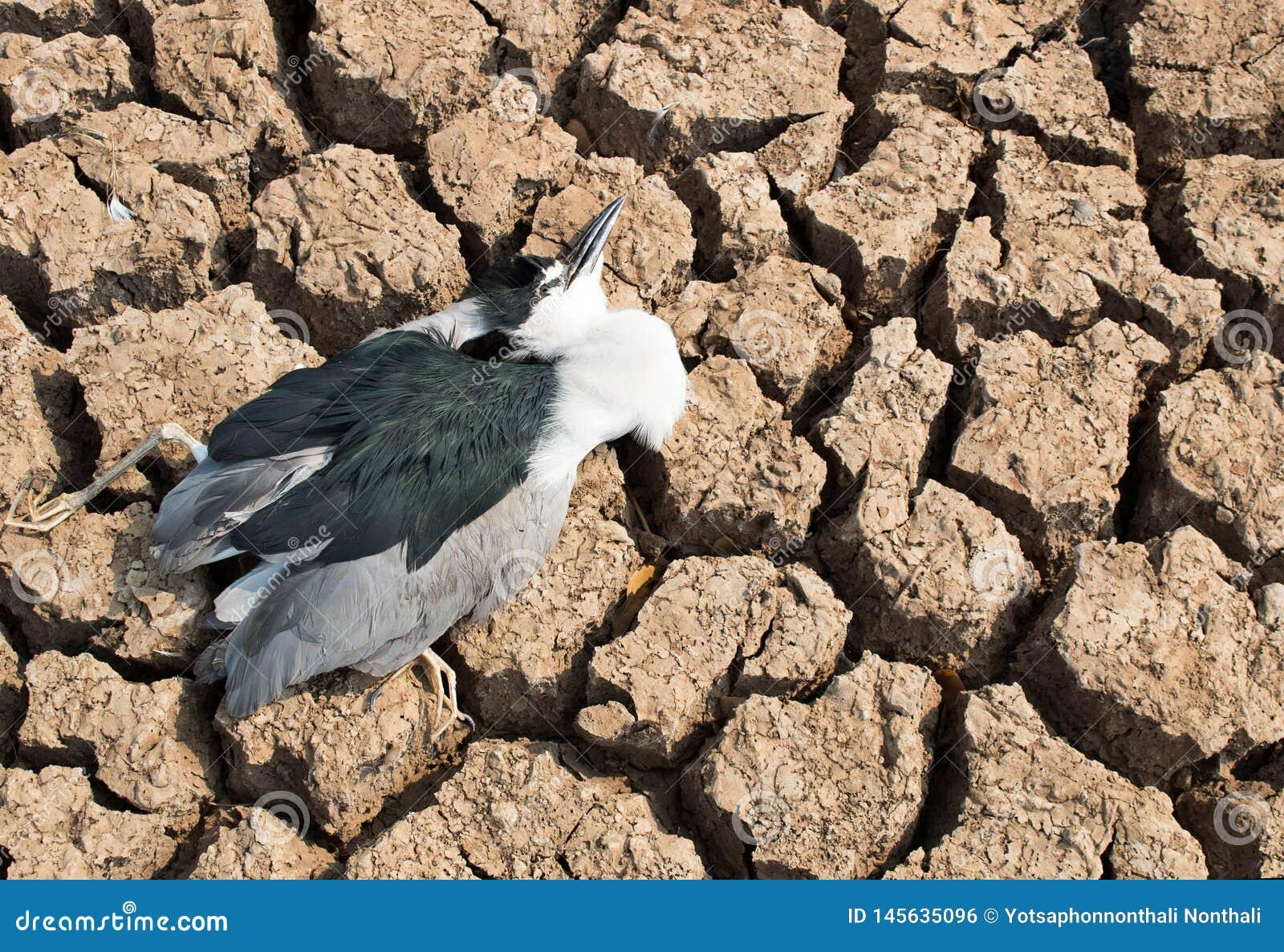 Carcasse d oiseau