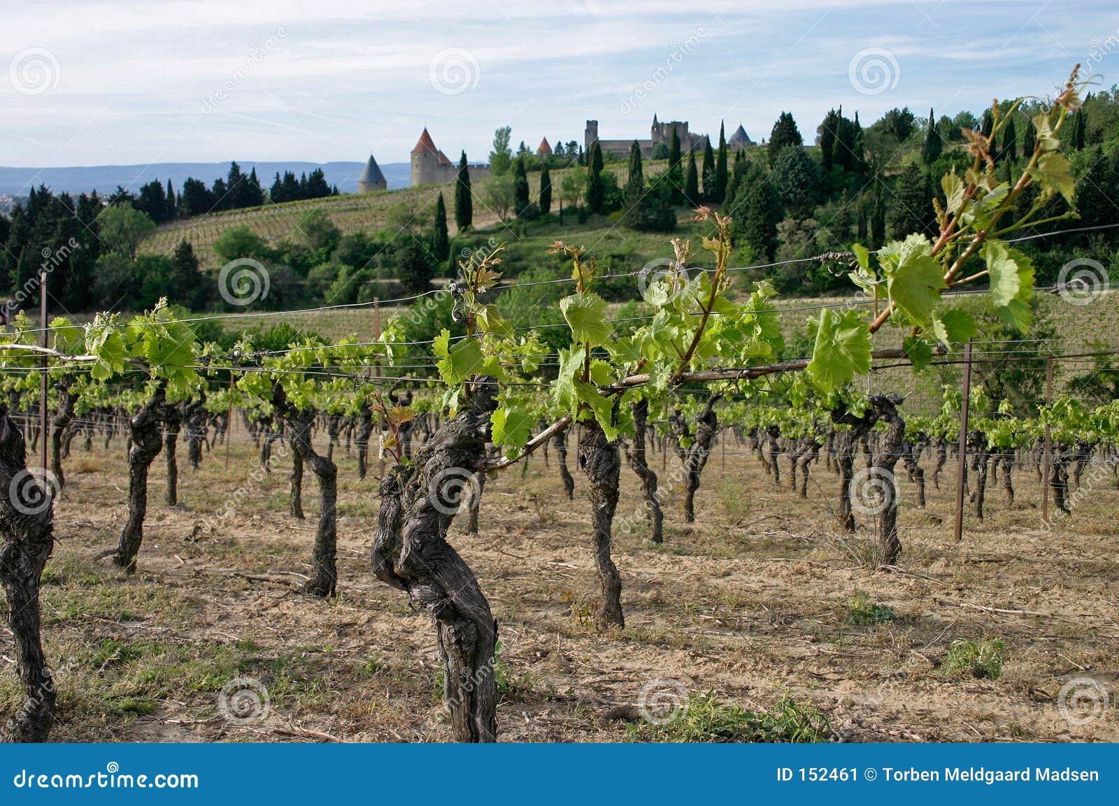Carcassonne en wineyard