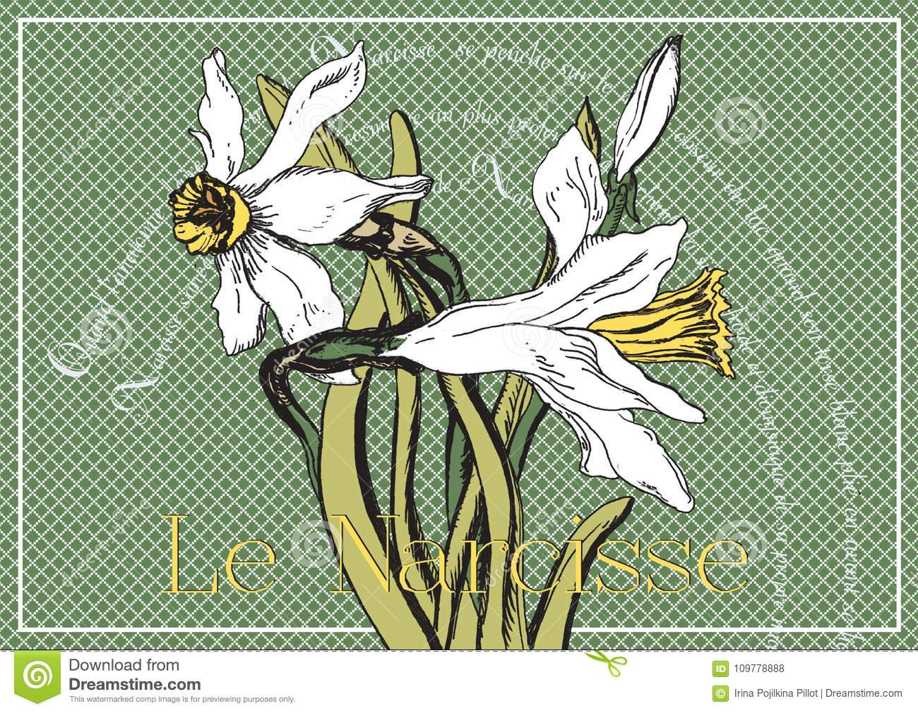 Card With Narcissus And Poems Stock Illustration Illustration Of