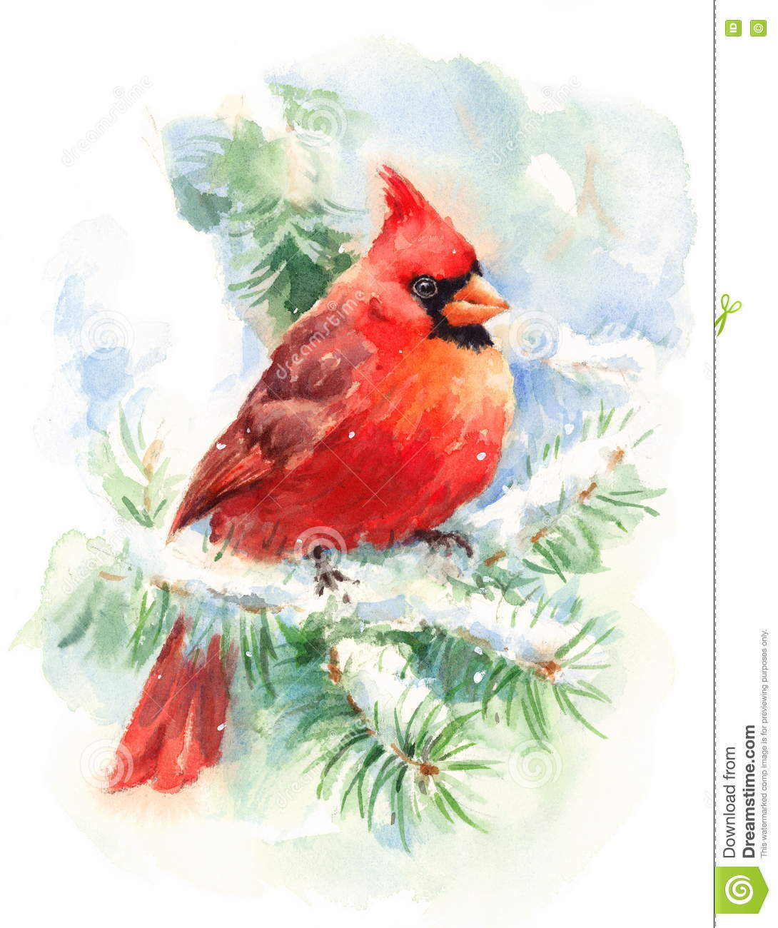 Cardinal Bird Watercolor Winter Illustration Hand Painted ...
