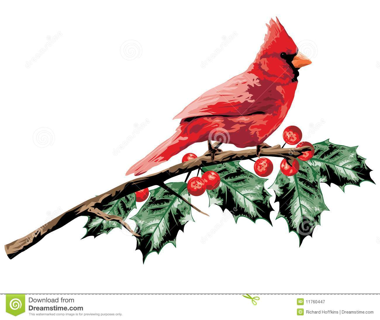 ... Free Stock Photography: Cardinal on Holly Branch. Image: 11760447