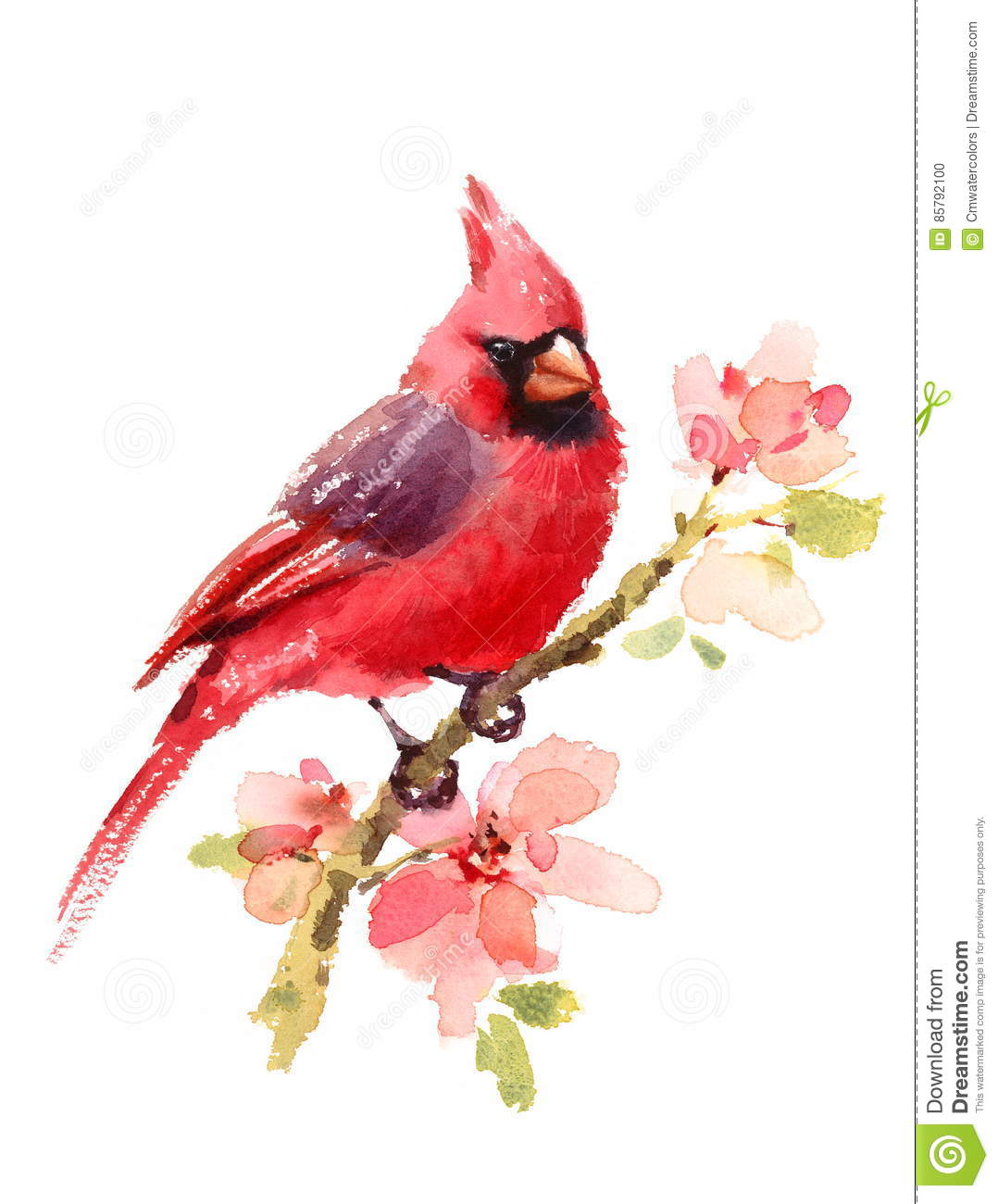 Cardinal Red Bird On Branch With Flowers Watercolor