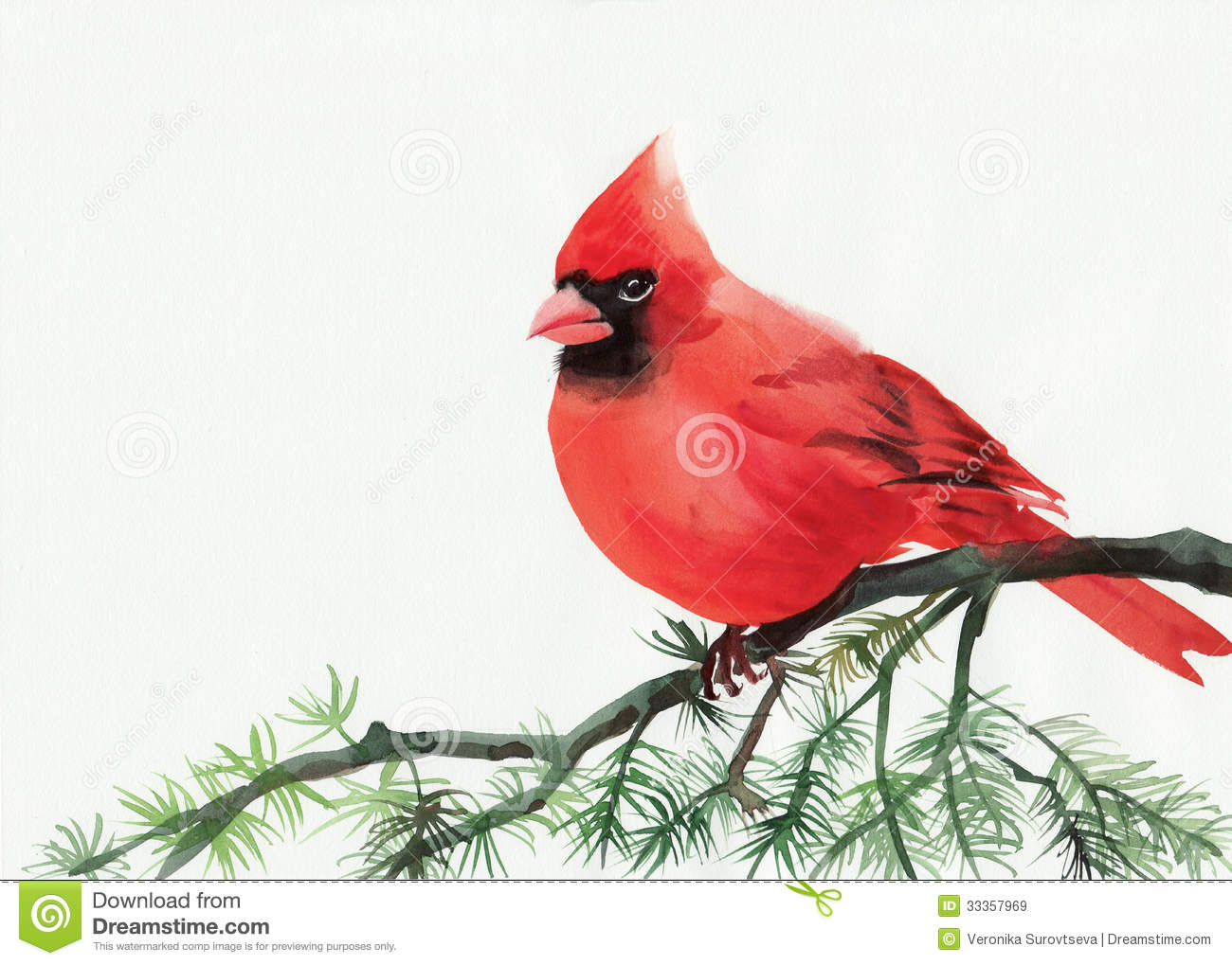 Cardinal Royalty Free Stock Images - Image: 33357969