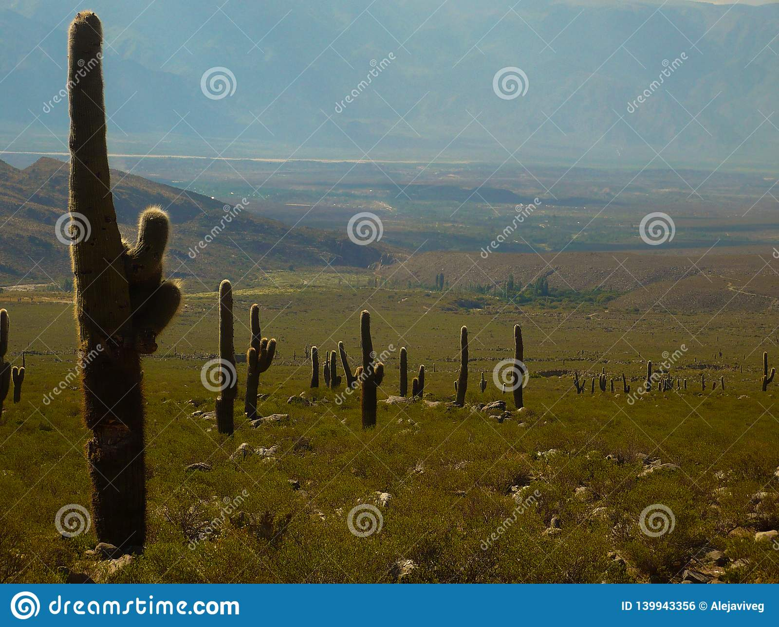 Cardones and cactus that grow between the arid mountains of the Argentine north