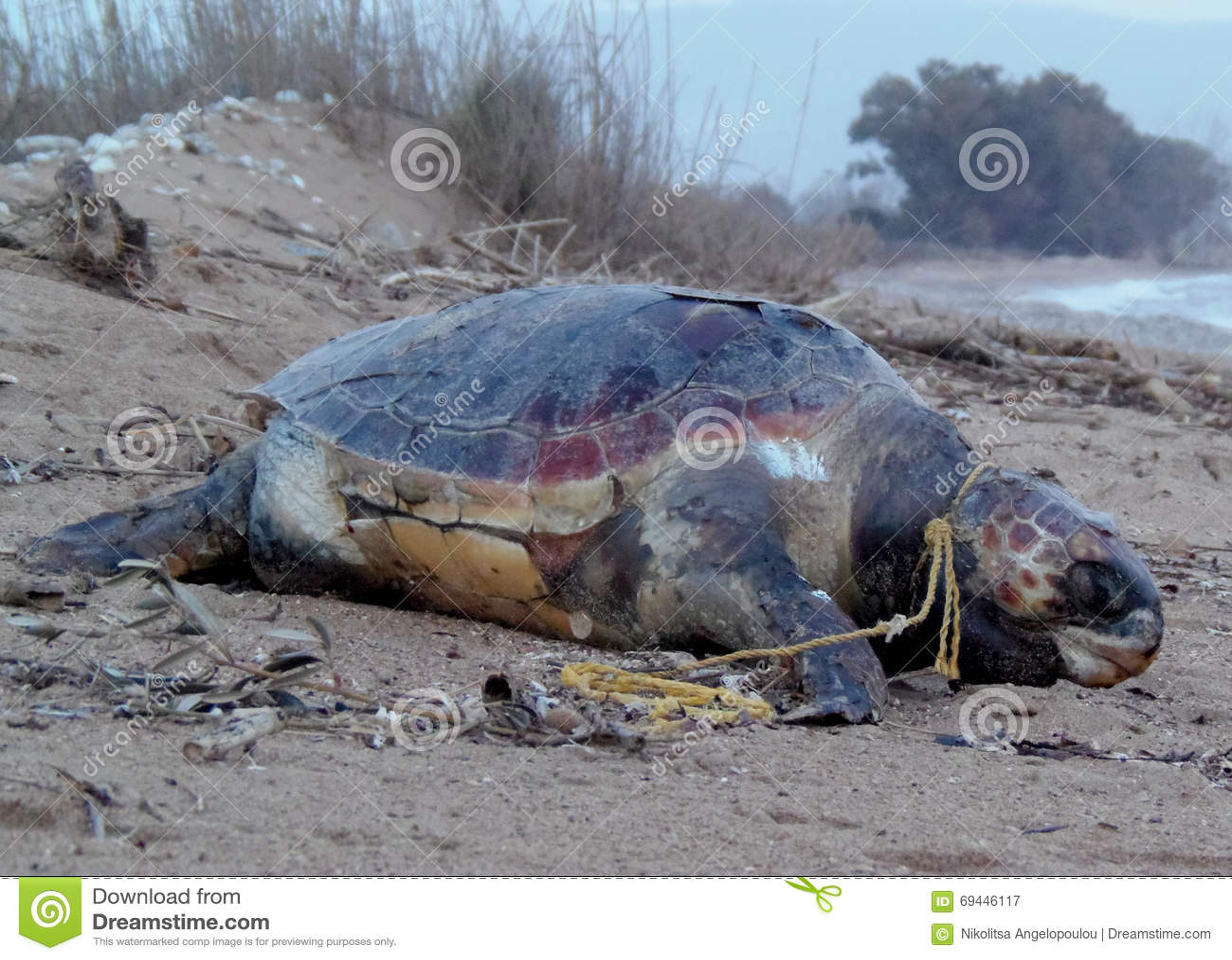 Caretta do Caretta inoperante na praia