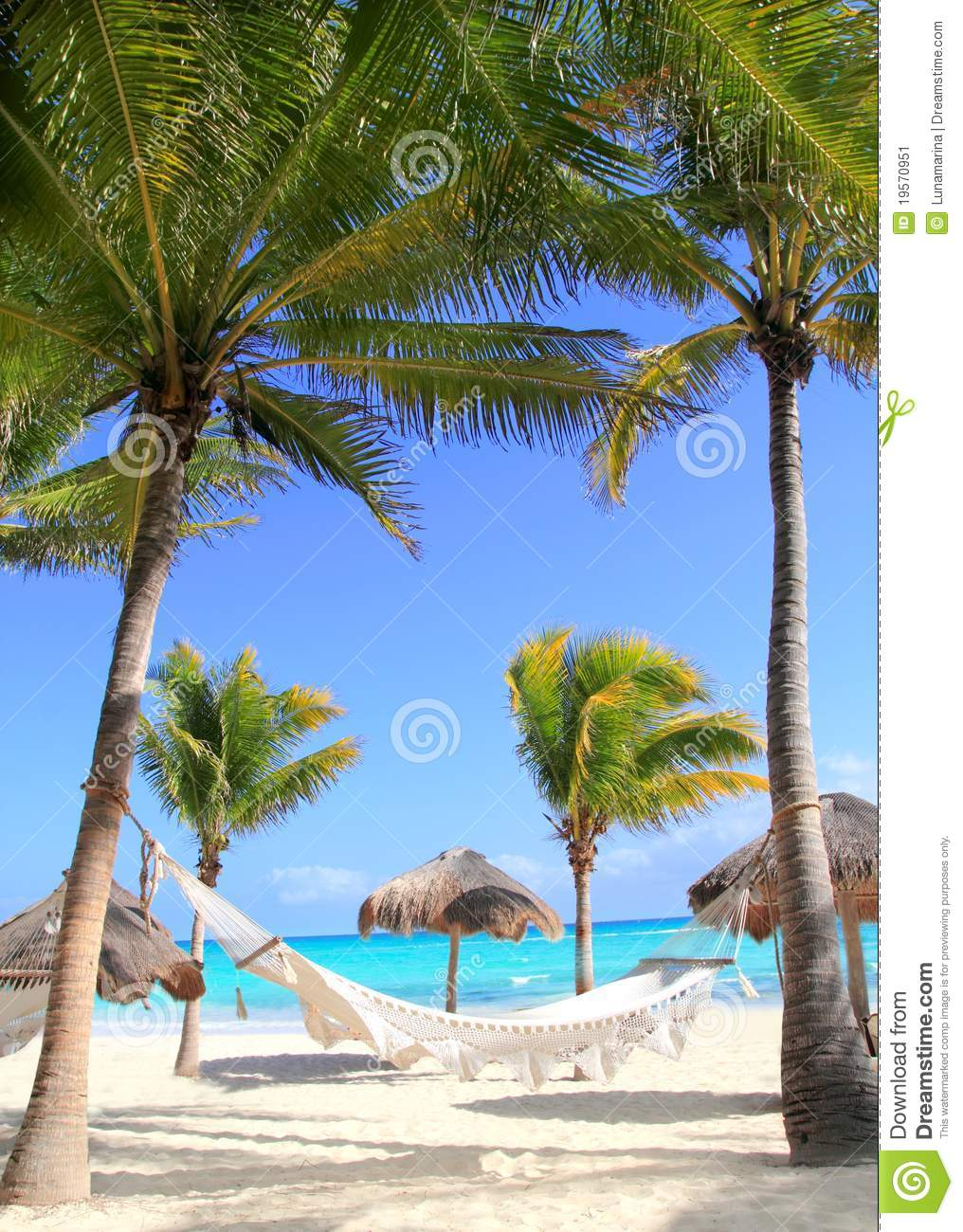 Caribbean Beach Hammock And Palm Trees Stock Image Image