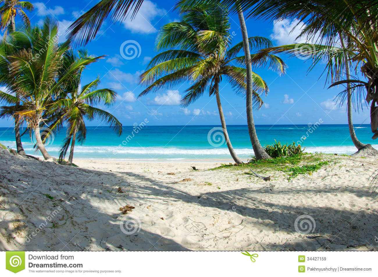 Caribbean Beaches Photo Gallery: Caribbean Beach Stock Image. Image Of Landscape, Plant