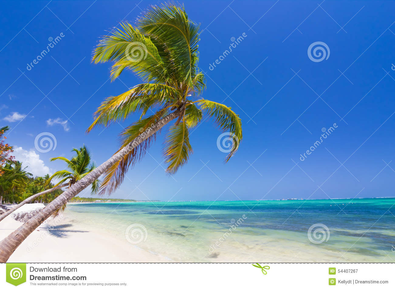 caribbean beach in punta cana stock image image of coconut