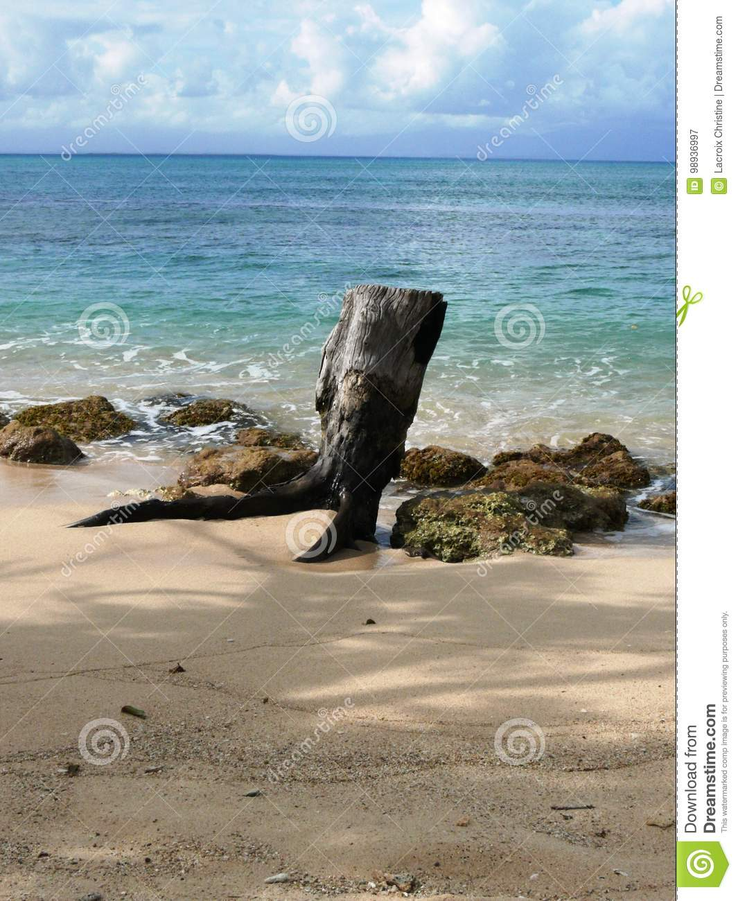 Guadeloupe Beach: Caribbean Beach And Stranded Wood In Guadeloupe. Stock