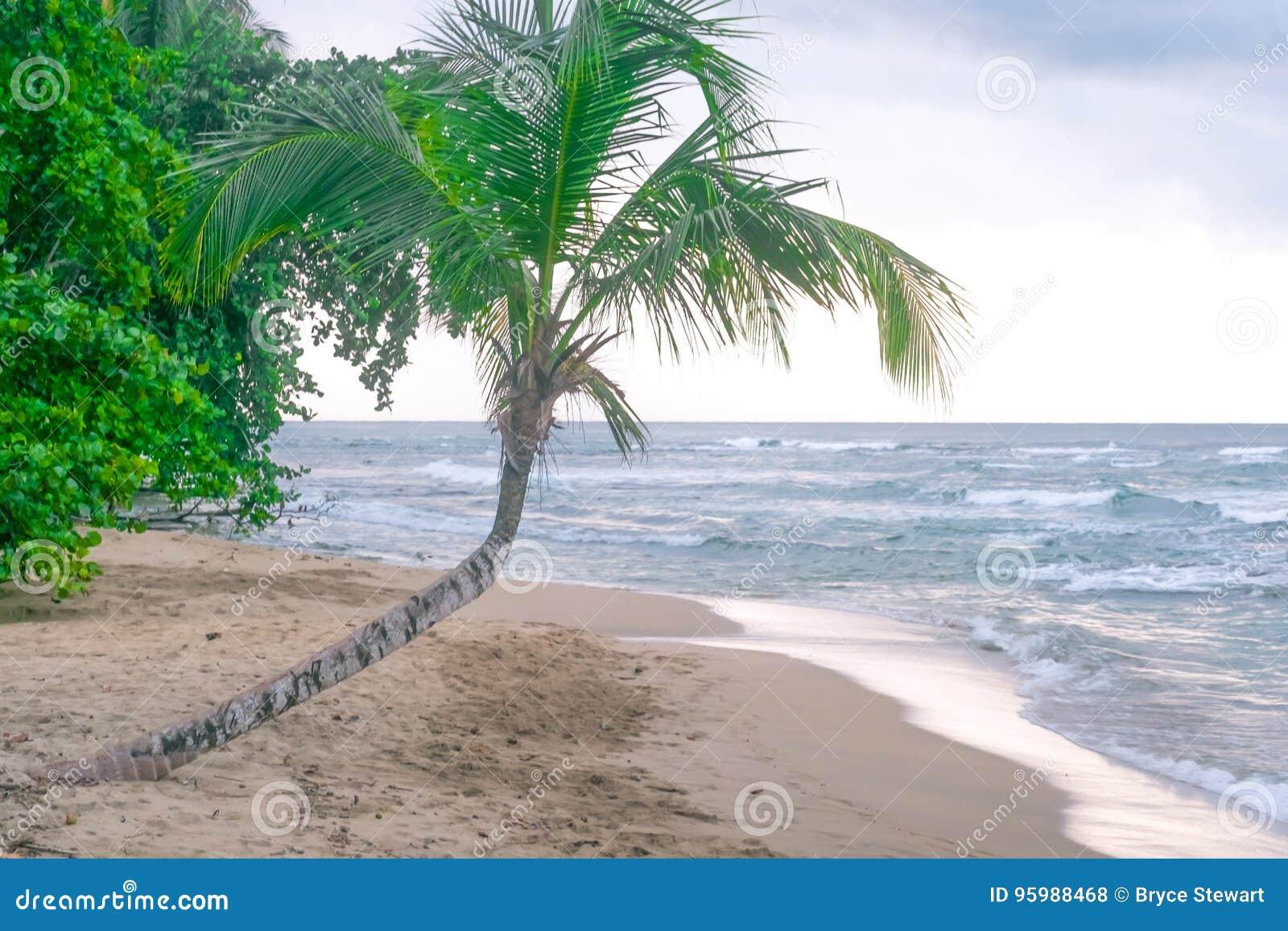 Caribbean Coast Costa Rica Palm trees Ocean Sea Paradise