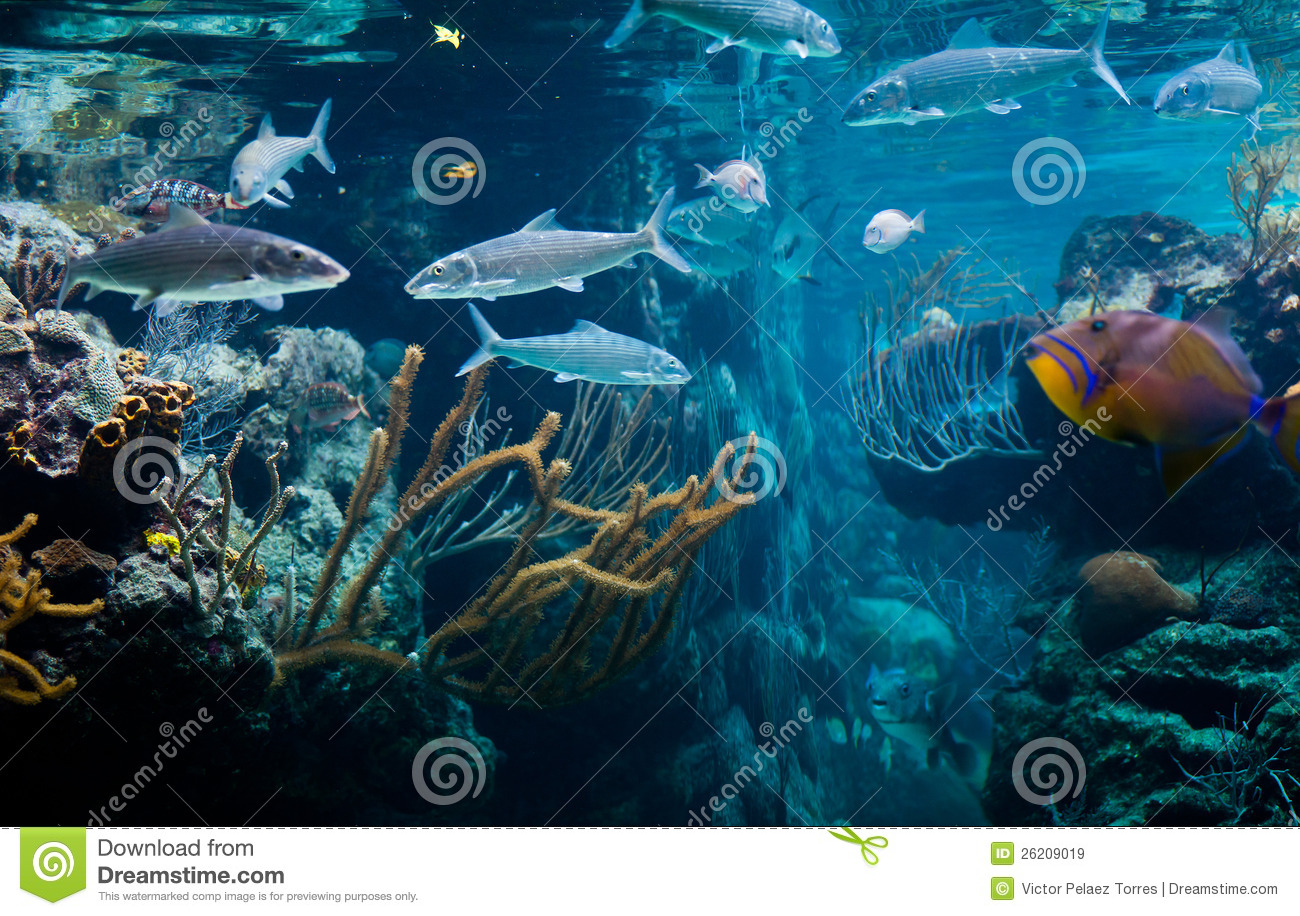Caribbean sea life with tropical fishes
