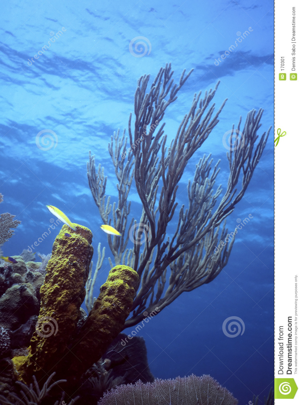 Caribe shallow reef