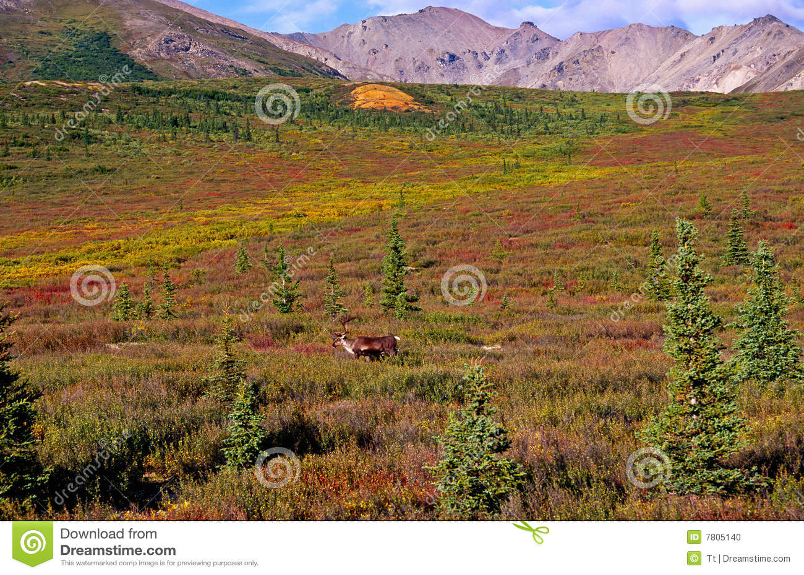Caribou tundra
