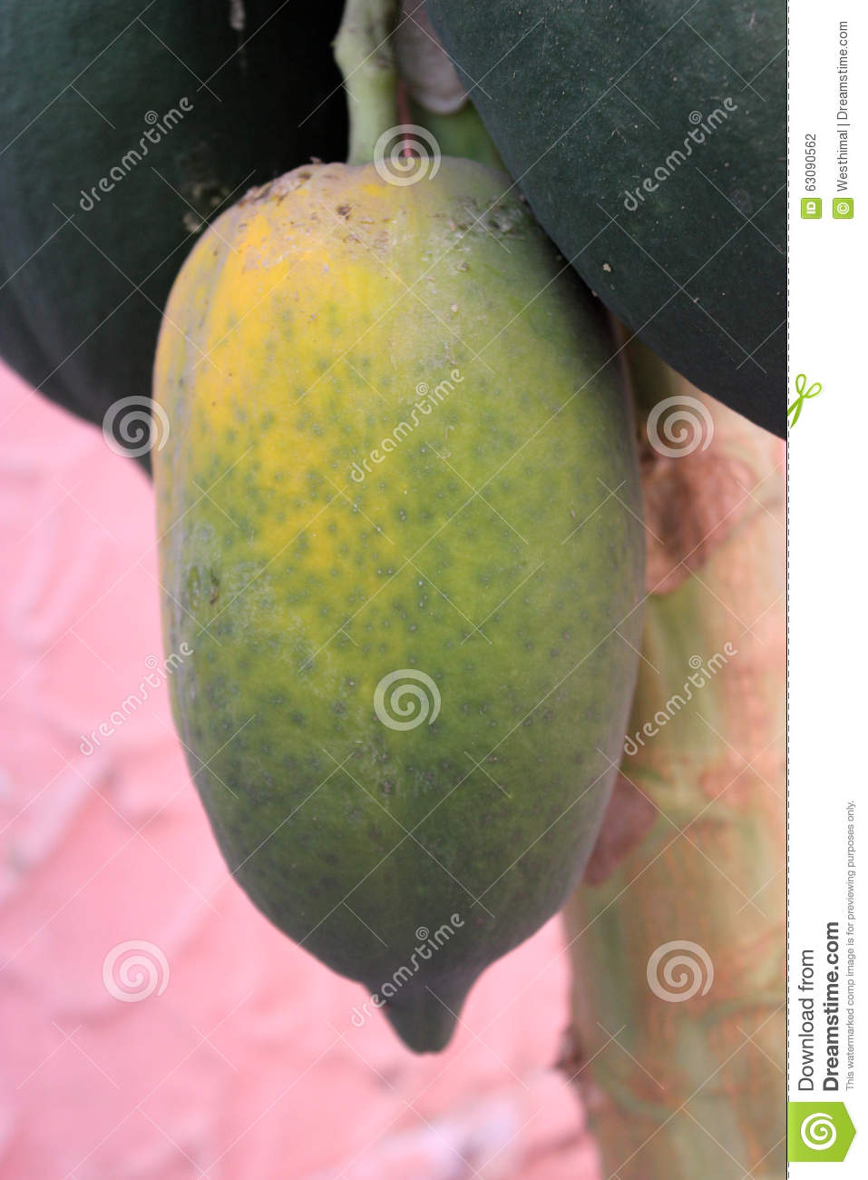 Download Carica papaya, papaye photo stock. Image du baie, terminal - 63090562