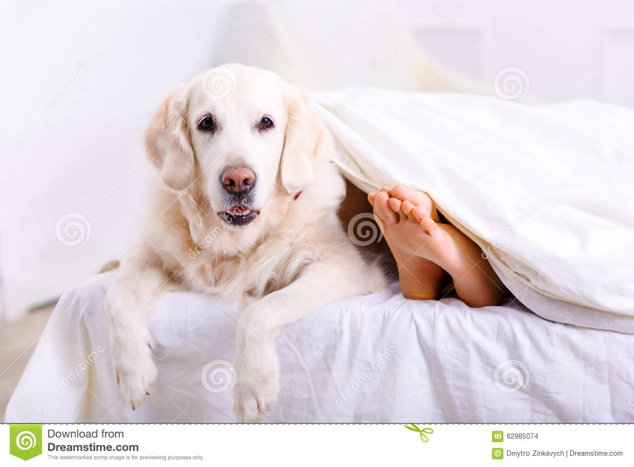 Caring Woman Lying On Bed With Her Dog Stock Photo Image