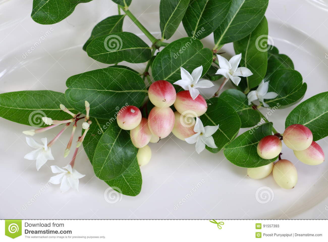 Carissa carandas L Flowers and leaves of mango, yew, lime, boiled on a palatable white dish.