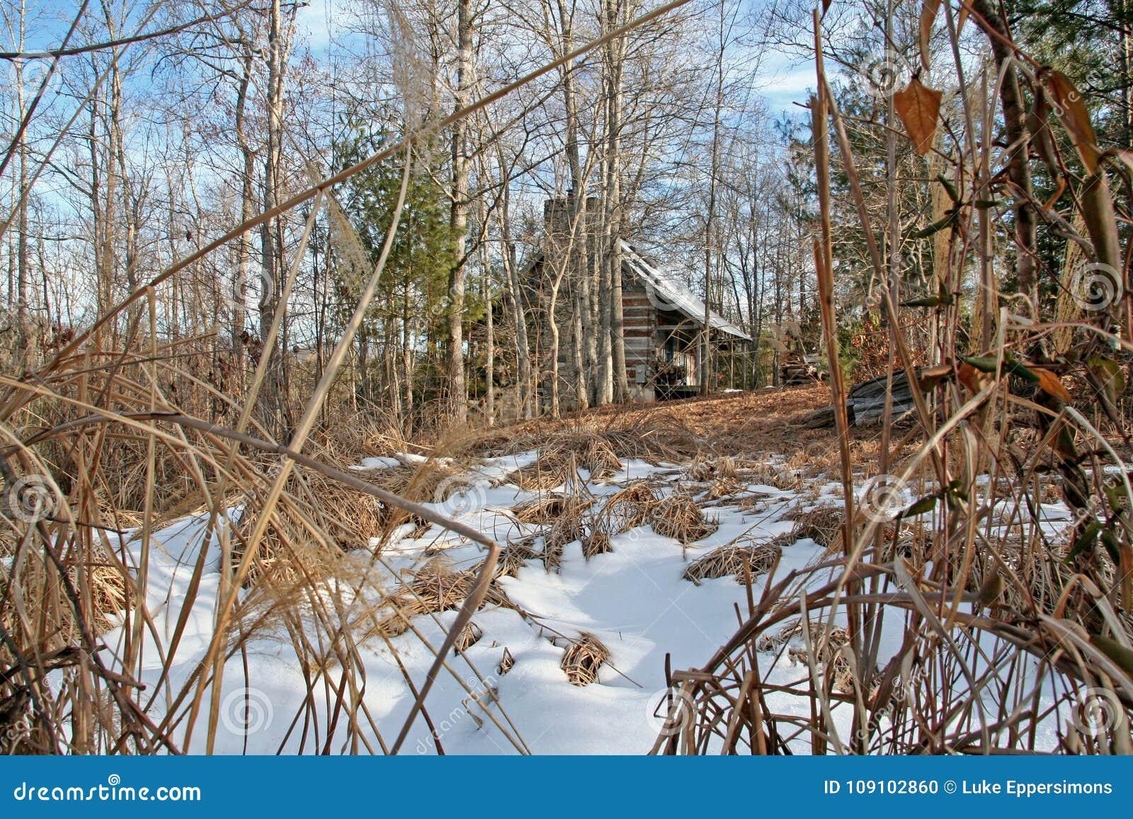 Carlingue effrayante dans les bois pendant la journée