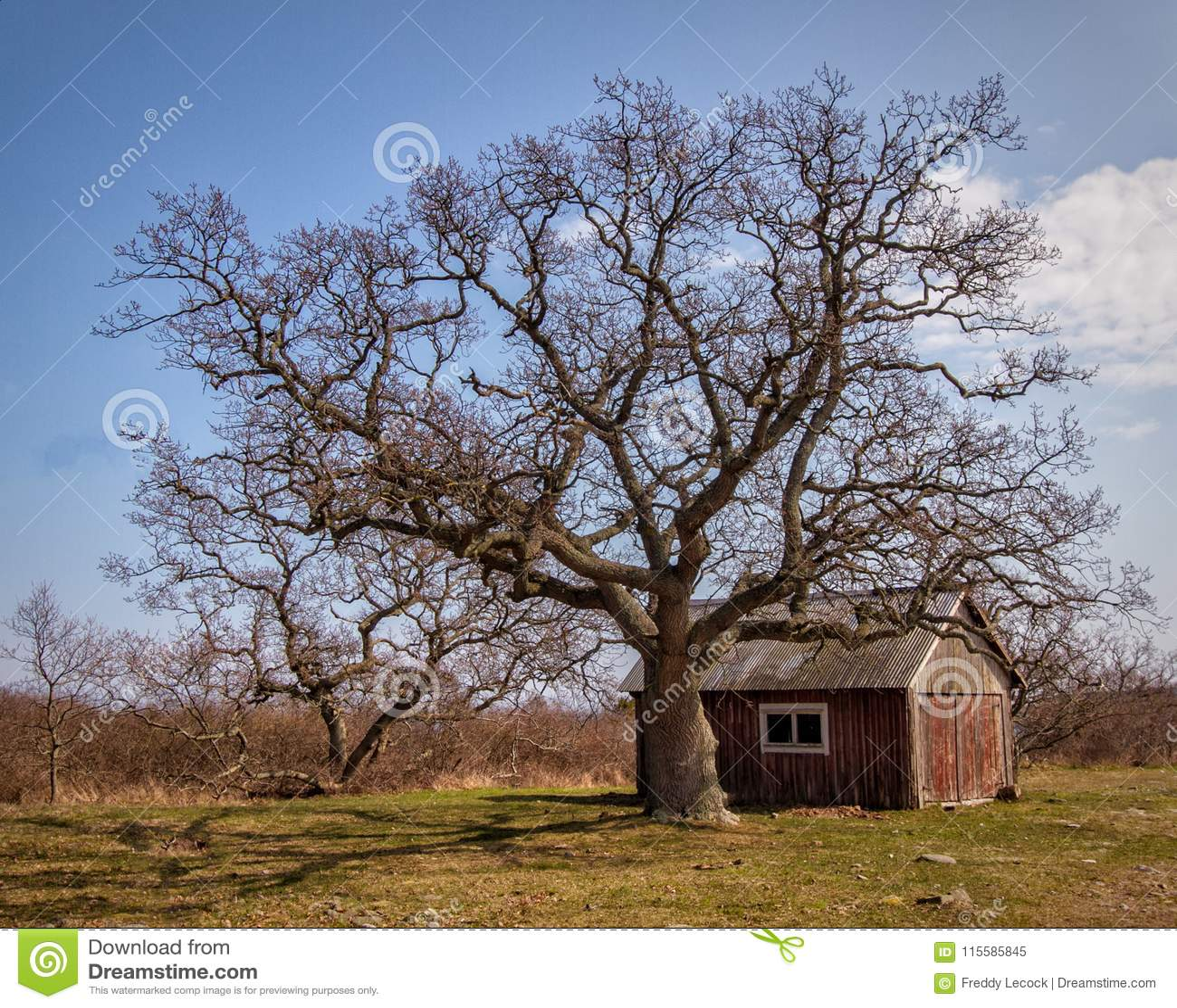 Carlingue et arbre d observateurs de phare