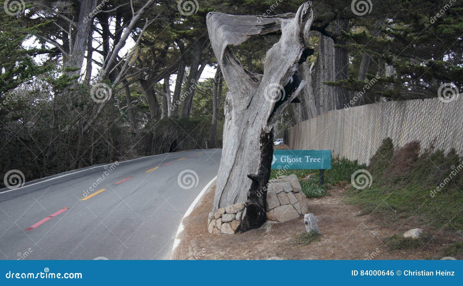 CARMEL, КАЛИФОРНИЯ, СОЕДИНЕННЫЕ ШТАТЫ - 6-ОЕ ОКТЯБРЯ 2014: Пункт Pescadero на приводе 17 миль, как дерево призрака Оно получает,