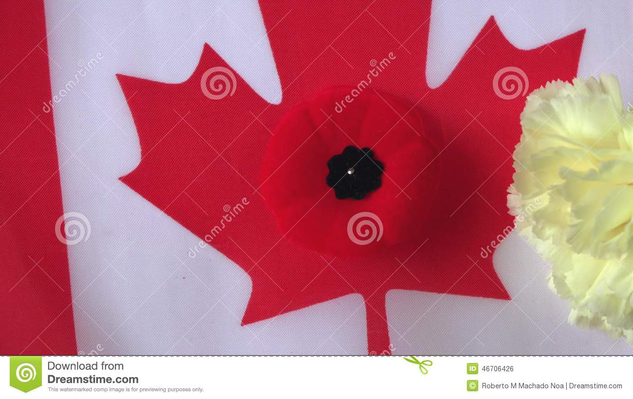Carnation flower in canadian poppy and canada flag during carnation flower in canadian poppy and canada flag during remembrance day stock footage video of fallen canadian 46706426 mightylinksfo