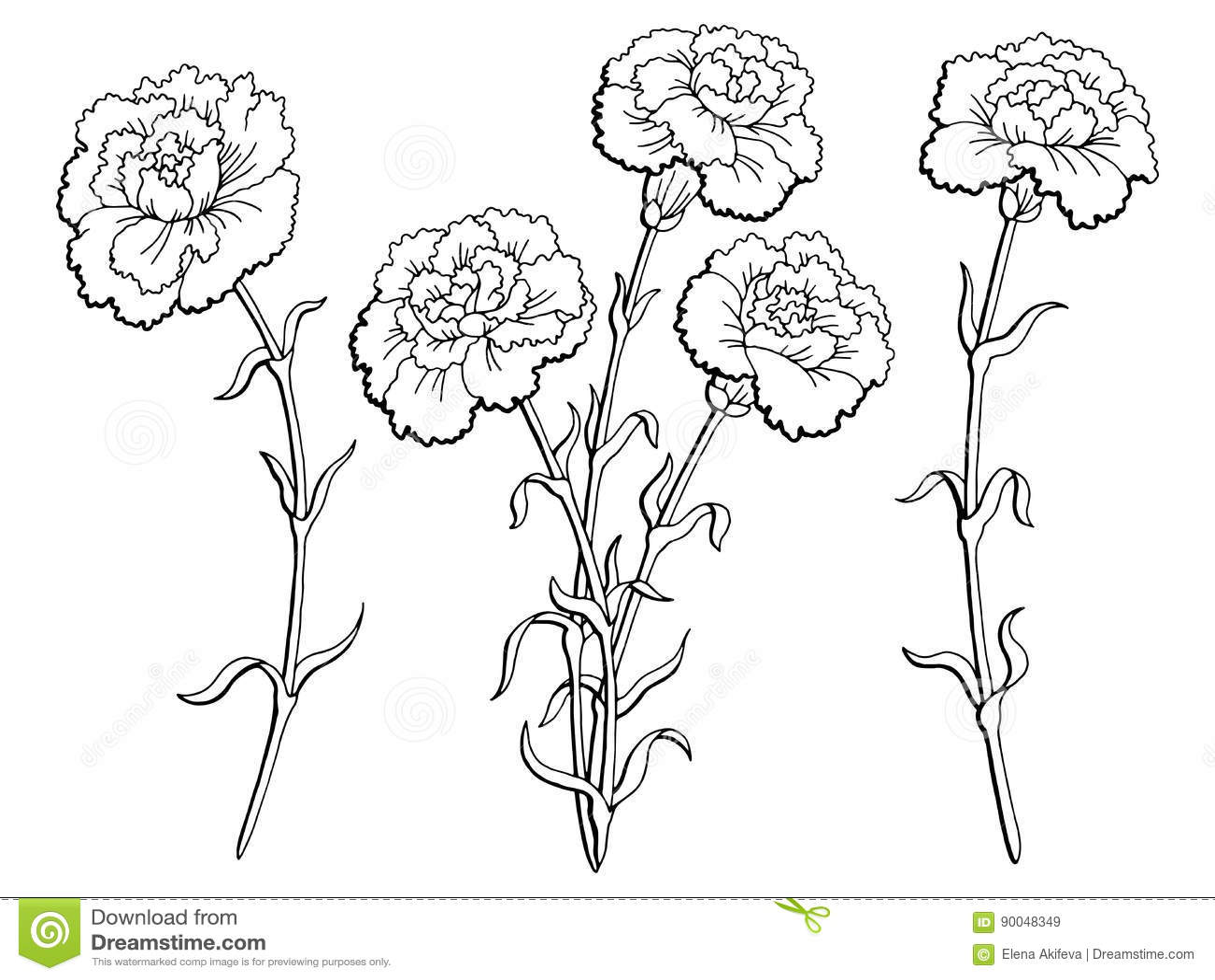 Carnation Flower Line Drawing : Carnation cartoons illustrations vector stock images