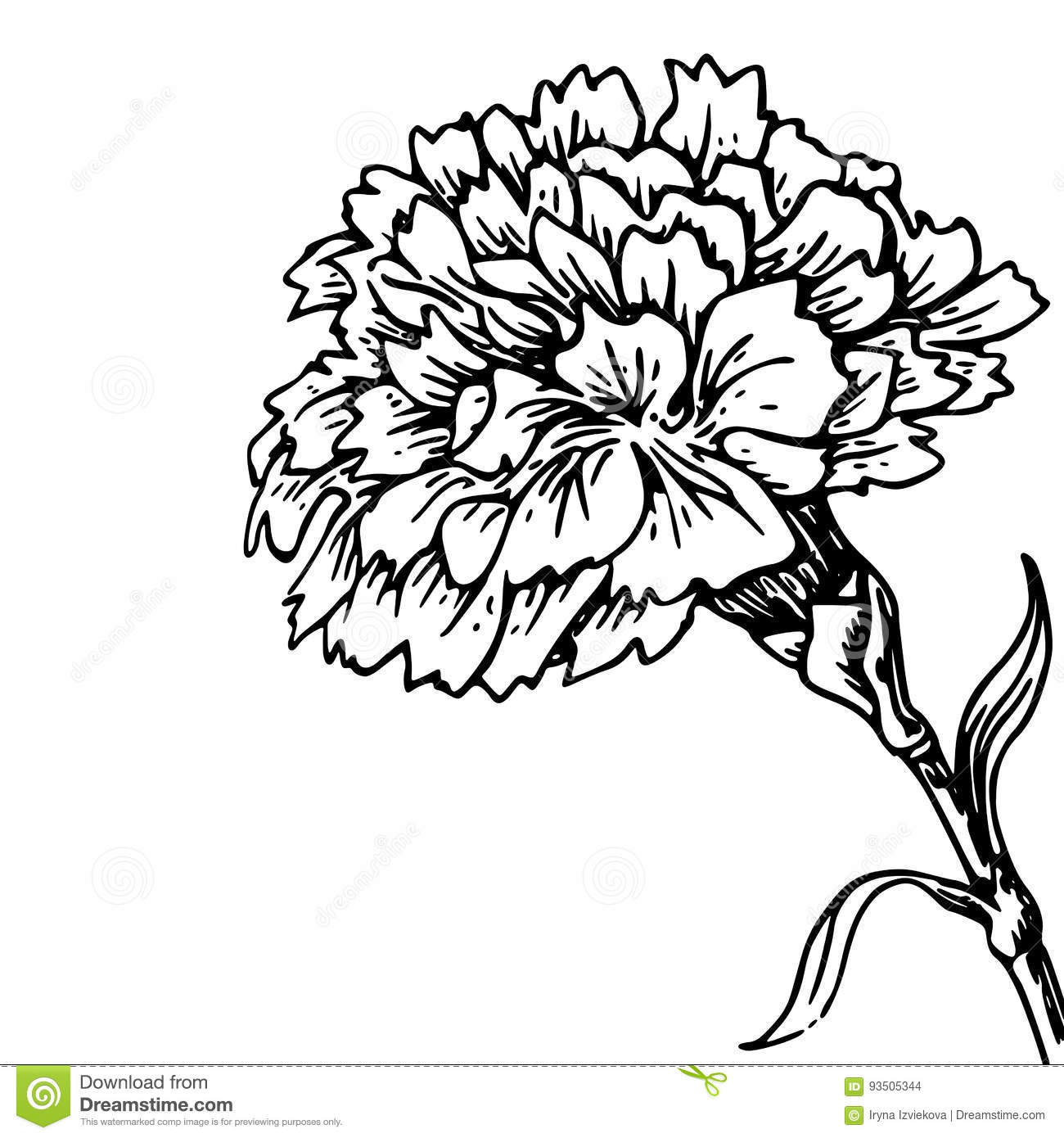 Flower Black And White Transparent PNG Pictures  Free