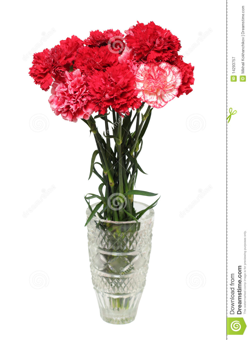 Carnation Flowers Bouquet In Vase Stock Image Image Of Flower