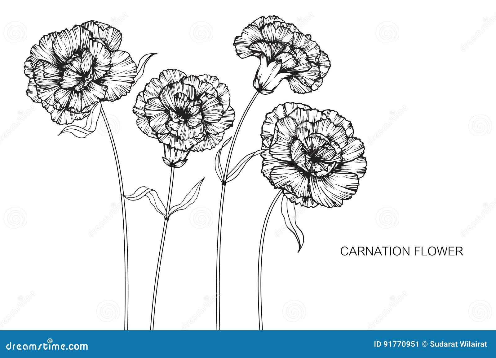 carnation diagram