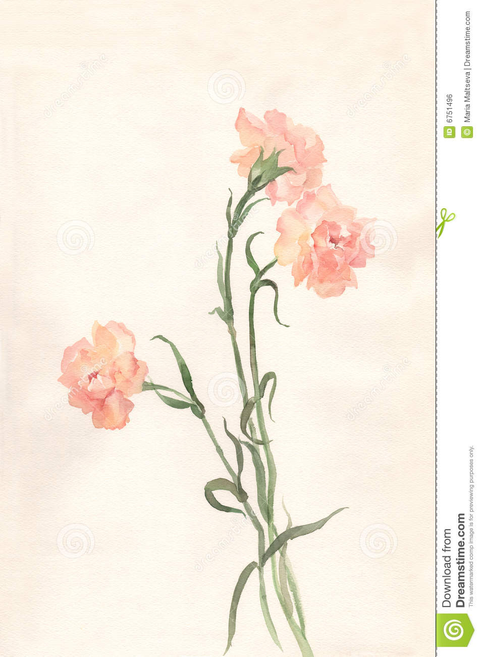 Carnation Oil Painting
