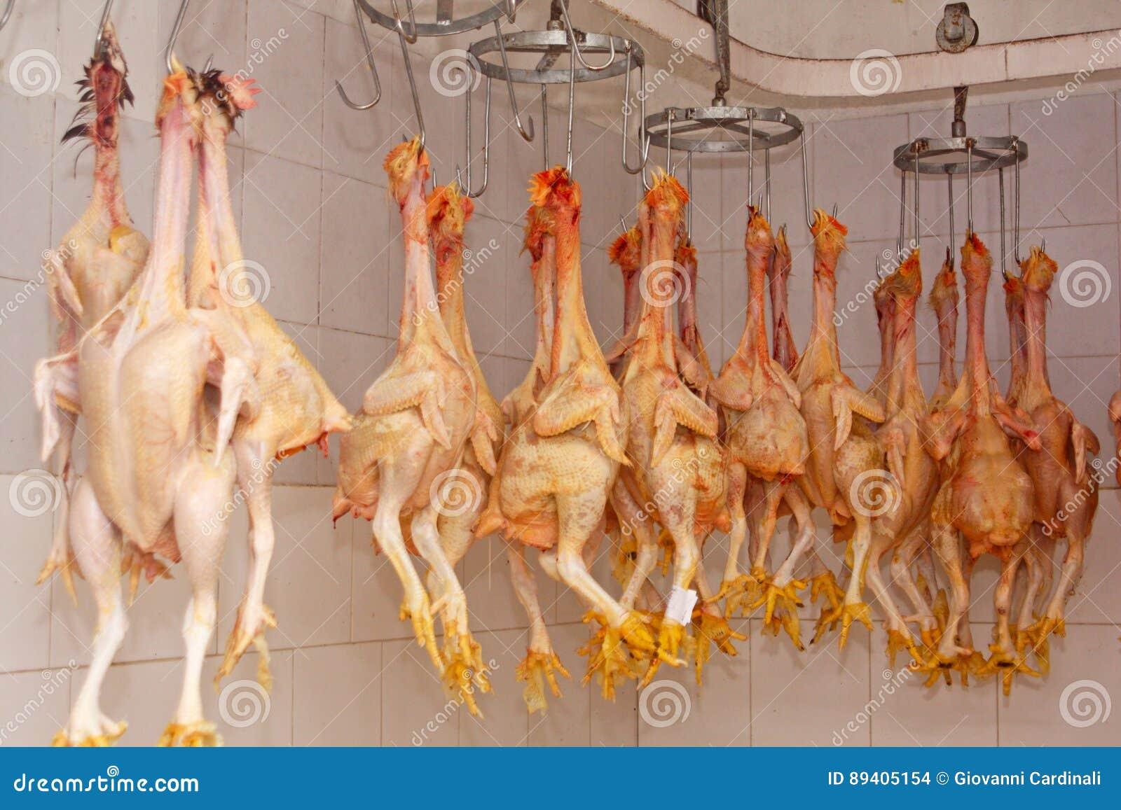 Carne crua da galinha