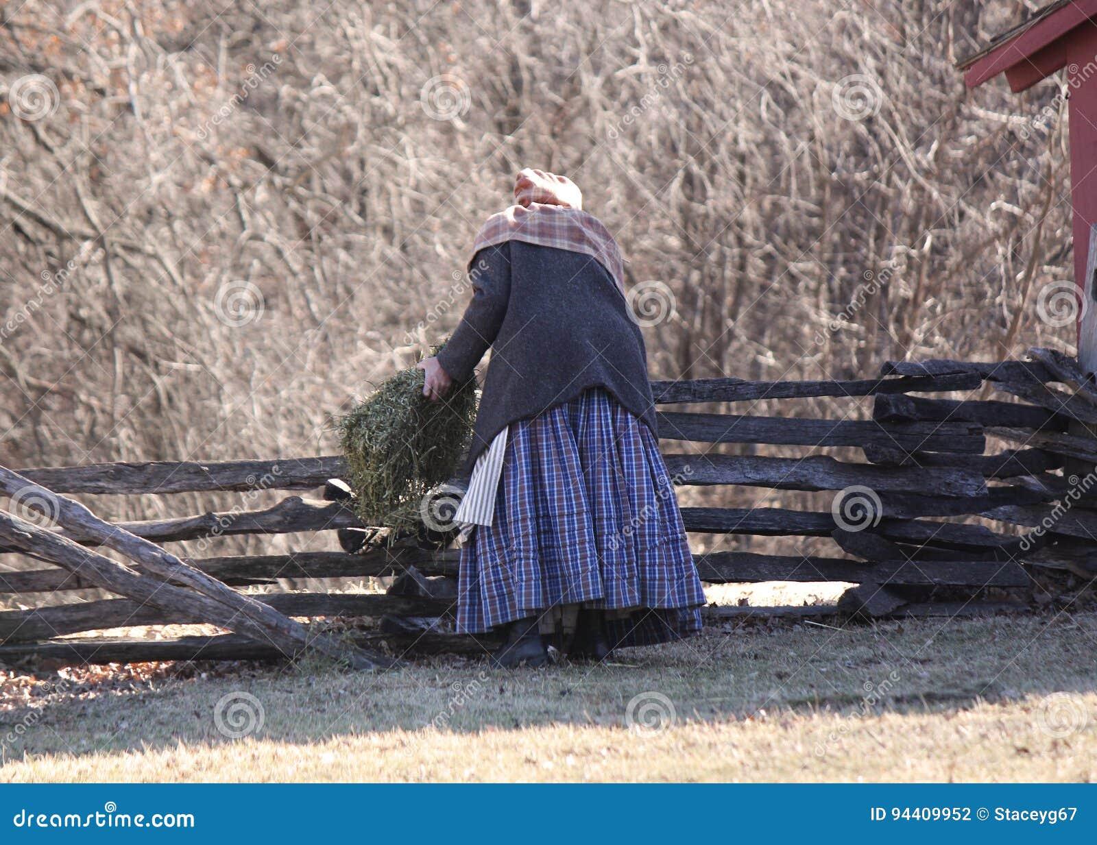 Carneiros de alimentação da mulher pioneira por uma cerca de trilho rachado