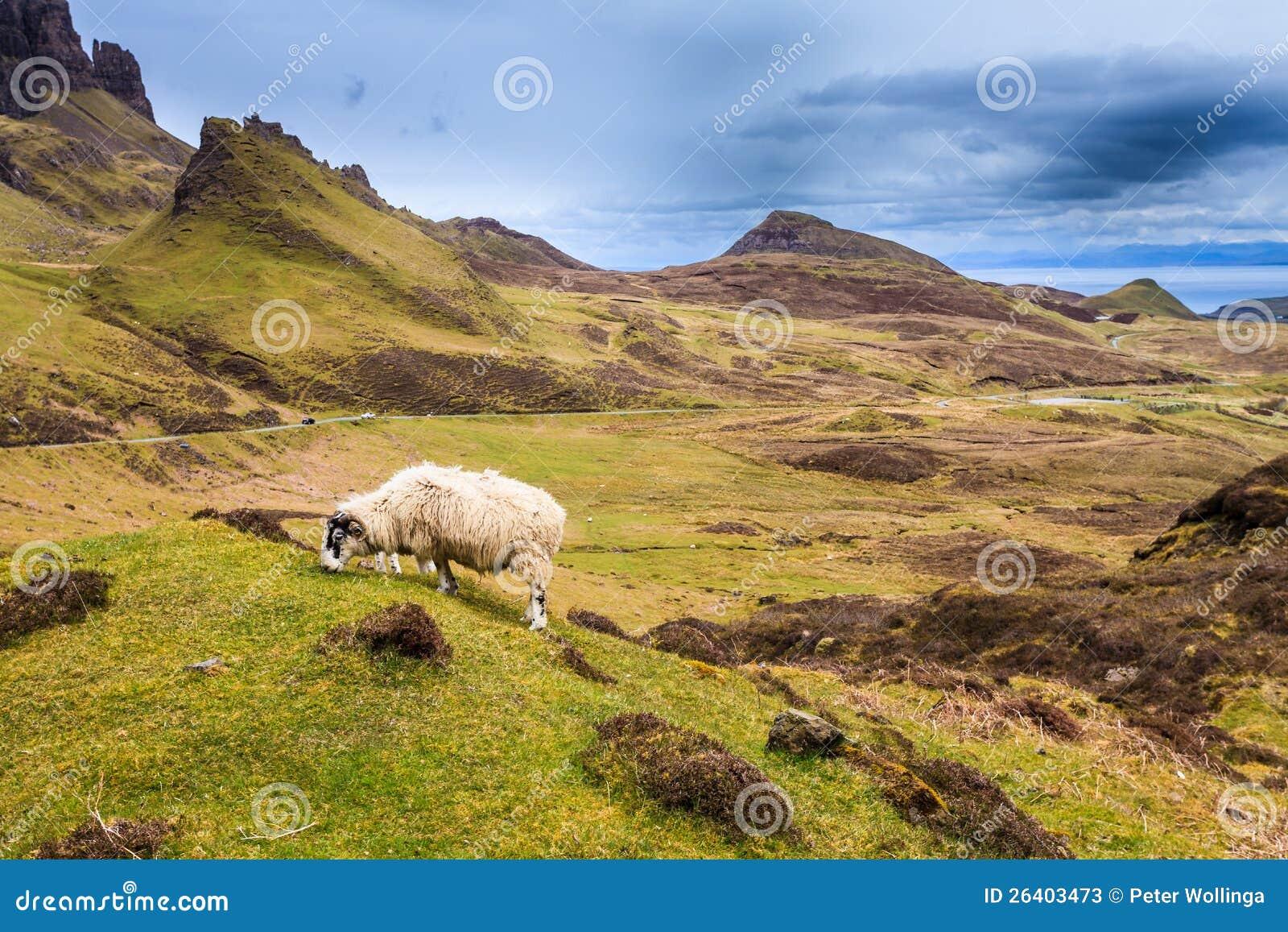 Carneiros que pastam nas montanhas