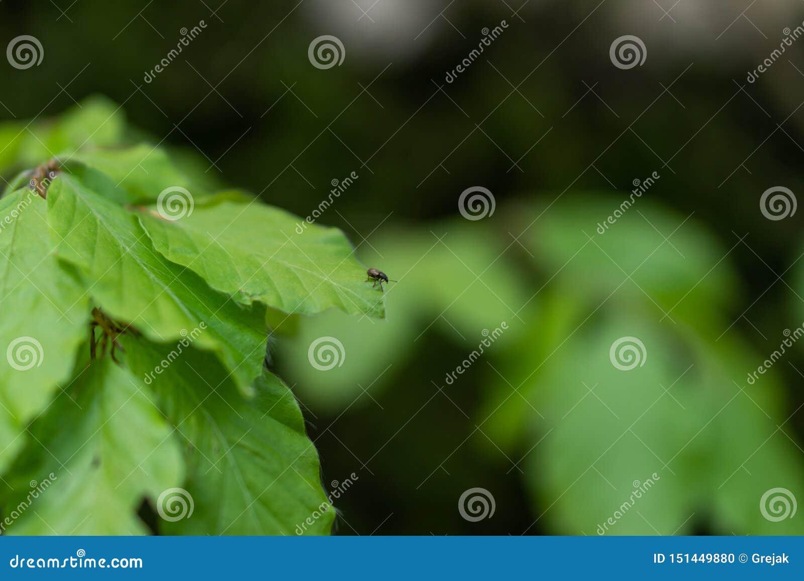 ?caro do parasita que senta-se em uma folha verde Perigo da mordida do tiquetaque