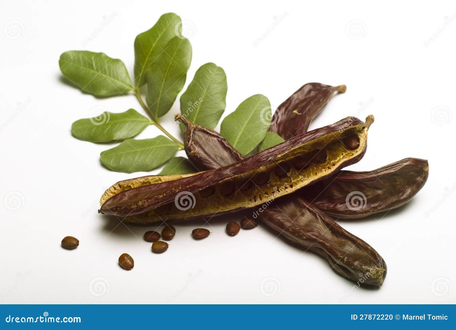 Carob (Ceratonia siliqua) with leaf