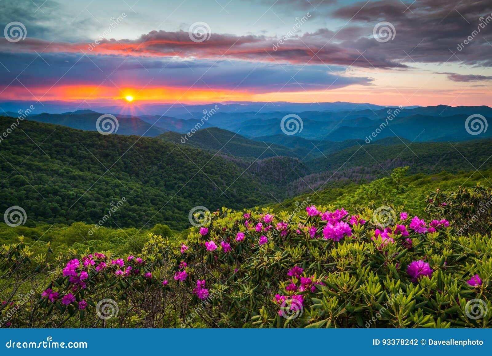 Carolina Blue Ridge Parkway Spring du nord fleurit la montagne scénique